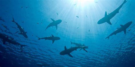 learn  shark tank hbx harvard