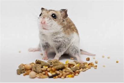 Hamster Recipe Organic Hamsters Feed Tail Wet
