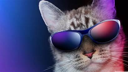 Cool Cat 4k