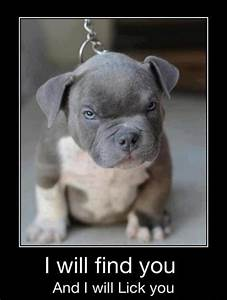 Cute Dogs with Captions for Monday! | Michael Bradley ...