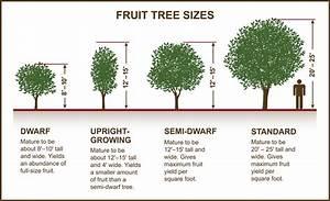 Tips For Selecting Fruit  U0026 Nut Trees  U00bb Planting  U0026 Care