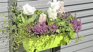 Jardiniere Fleurie Plein Soleil : fleur de balcon plein soleil fleurs balcon plein soleil ~ Melissatoandfro.com Idées de Décoration