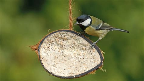 the rspb news feeding the birds is more popular than ever