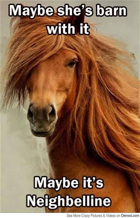 funny horse racing memes racehorse meds