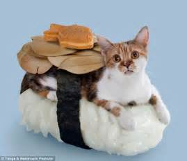 sushi cats mog fried rice the sushi cat photographs that are