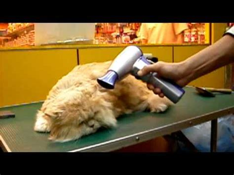 simpel pet v easy cordless pet hair dryer rechargeable