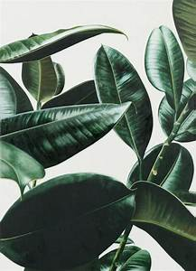 Photo ({ wit + delight }) | Inspiration, Green leaves and NASA