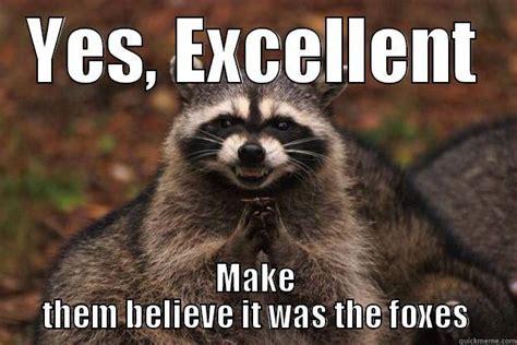 Raccoon Excellent Meme - excellent meme raccoon