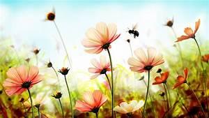 wallpaper, flowers, , 5k, , 4k, wallpaper, , 8k, , spring, , art, , nature, , 4657
