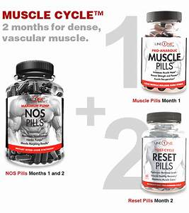 Muscle Cycle Graphic