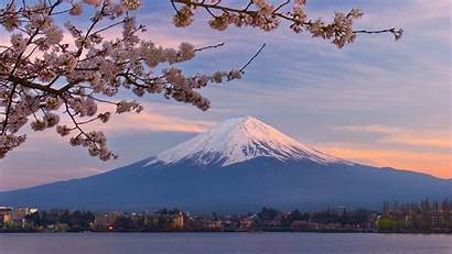 Cherry Japan Blossoms Fuji Mount Wallpapers Countries