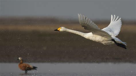 Large flocks of migratory birds arrive at SE China wetland ...
