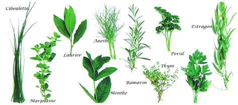 plantes aromatiques cuisine 92327772 o jpg 1 800 800 pixels herbarium aromaticum