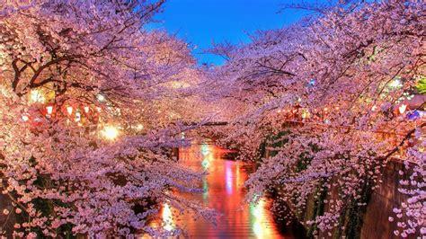 cherry blossom backgrounds wallpaperwiki