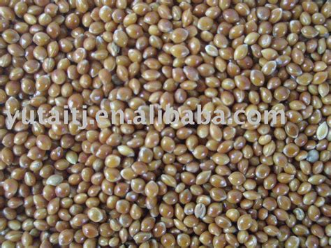 red millet bird feed bird seed products china red millet