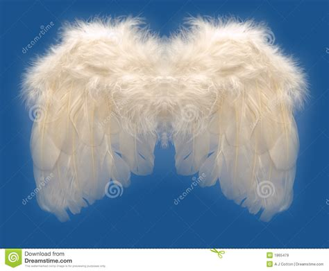 angels wing royalty  stock images image