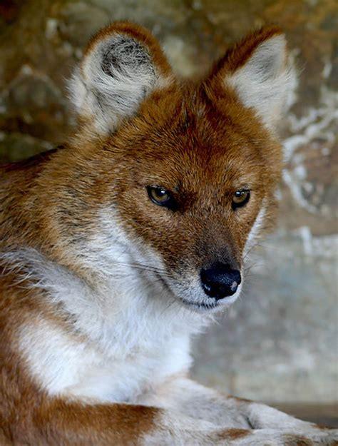 Help Save Wildlife  World Animal Foundation