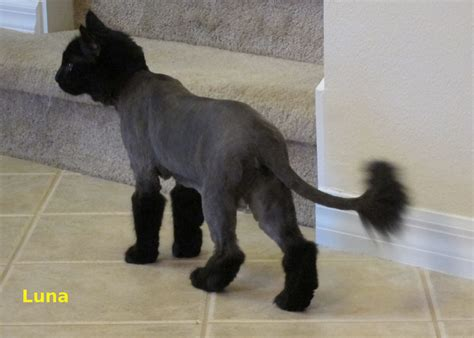 images  dog hair  pinterest haircuts