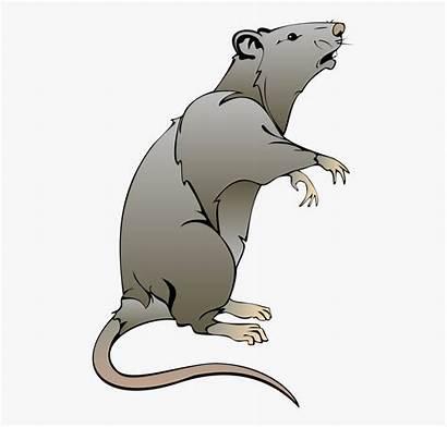 Ratte Maus Ratten Clipart Kostenlos Cliparts Transparent