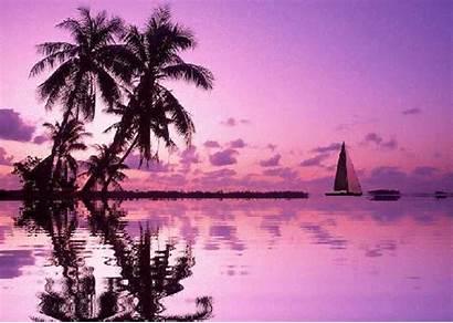 Animated Palm Sunset Purple Gifs Ldv Ecran