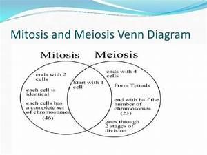Mitosis Vs Meiosis Venn Diagram Answers