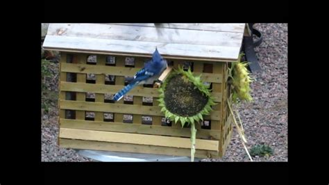 diy bird feeder house  small birds  youtube