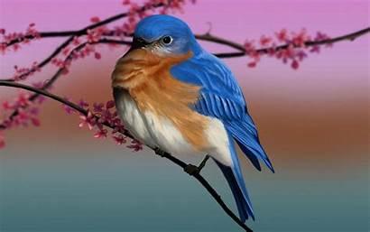 Bluebird Bird Desktop Eastern Wallpapers Backgrounds Computer