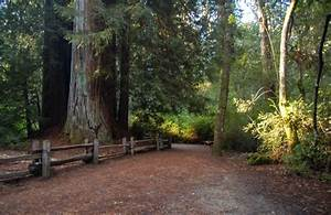 California's Big Basin Redwoods State Park - Anything Is ...
