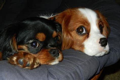 comment empecher chien de monter sur le canape 28 images