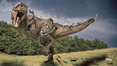 Rex Tyrannosaurus Wallpapers Manipulation Cat Jurassic Cats