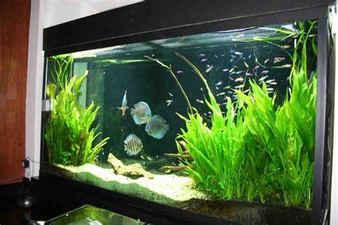 Freshwater Aquarium Decorations  Decor Ideasdecor Ideas