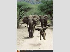 Dumbo lebt! Lustige Bilder auf Spassnet