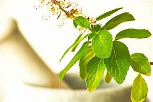 Holy Basil Naturally Lowers Cortisol And Anxiety Levels