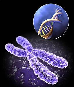 Medical Addicts  Chromosomes And Associated Disorders