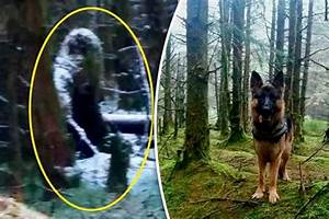 Bigfoot Photographed in Northern Ireland After Scaring A ...