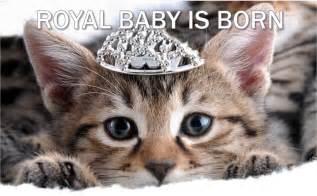royal cat pin by sweet lip gloss williamson on royal cats