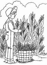 Harvest Coloring Pages Harvesting Corn Printable Familycorner Template Corner Staff Posts Pumpkin sketch template