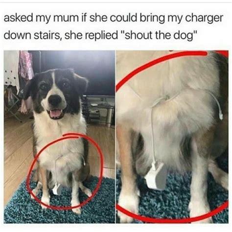 Dog Phone Meme - iphone tumblr