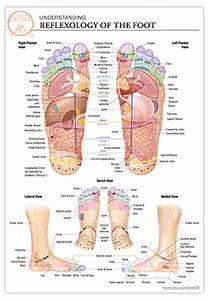Reflexology Charts For Sale Reflexology Foot Chart Reflexology Of The Feet The