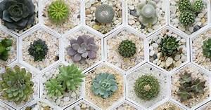 Cactus, crasas y suculentas Consejos Verdecora
