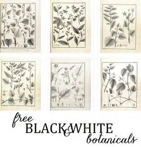 Emily Dresser by Free Black And White Botanical Art Emily A Clark