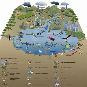 Fate And Transport Of Ee2 In The Aquatic Environment