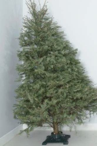 how to fix a leaning christmas tree best 28 how to fix a crooked tree best 28 how to fix a leaning tree