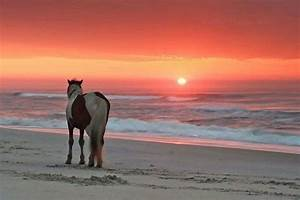 Sunset with horse | Scenery | Pinterest