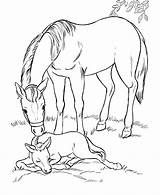 Horse Coloring Pages Cool Funny sketch template