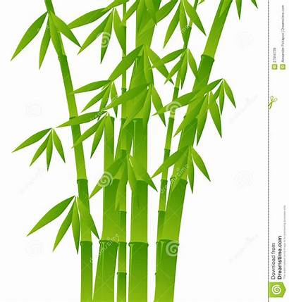Bamboo Clipart Background Plants Trees Tree Vector