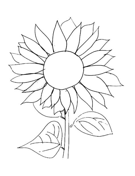sunflower coloring pages bestofcoloringcom