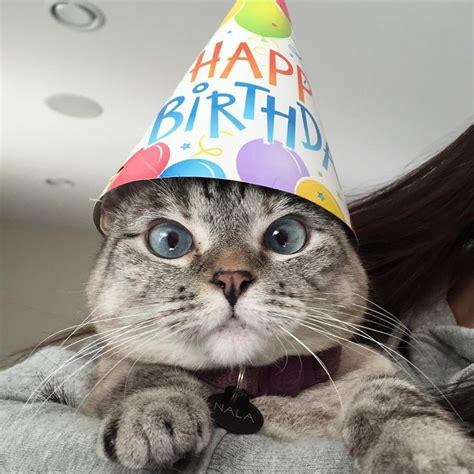 happy birthday funny cats ideas  pinterest