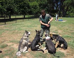 how to become a dog trainer getting a career that With become a dog trainer