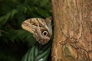Schmetterling Am Kinderbett : brauner schmetterling am baumstamm ~ Lizthompson.info Haus und Dekorationen